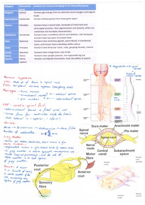 Principles Of Human Structure Summary Anatomy Notes Studentvip Notes