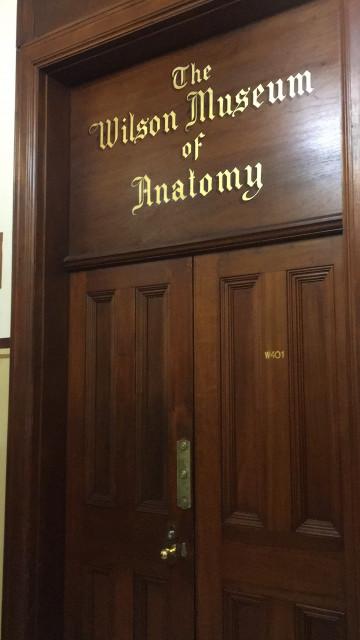 The Wilson Museum Of Anatomy At Usyd Camperdowndarlingto